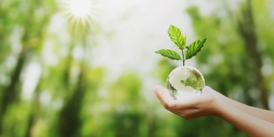 hand holding glass globe ball with tree growing and green nature blur background. eco concept
